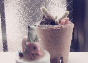 子豚とサボテン